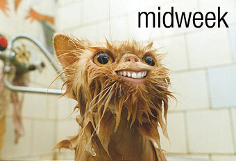 midweek_cat